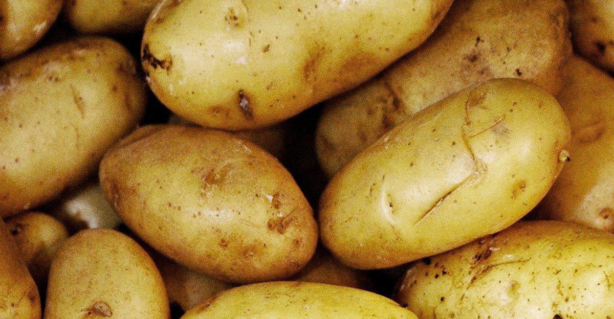 Picture of: Sadan Dyrker Du Kartofler Fa Grundig Vejledning Til Kartoffeldyrkning Her