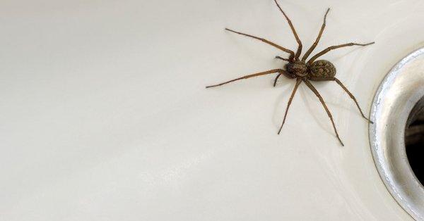 effektivt middel mod edderkopper