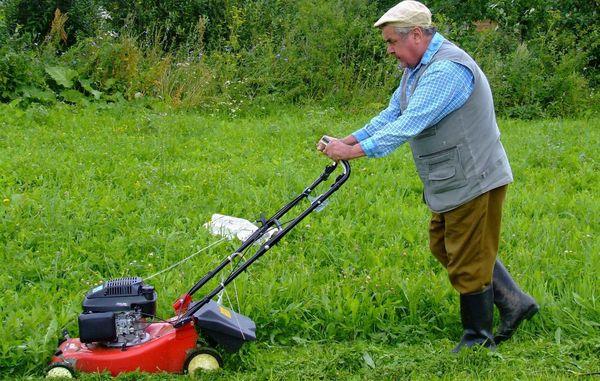 Pleje af græsplænen