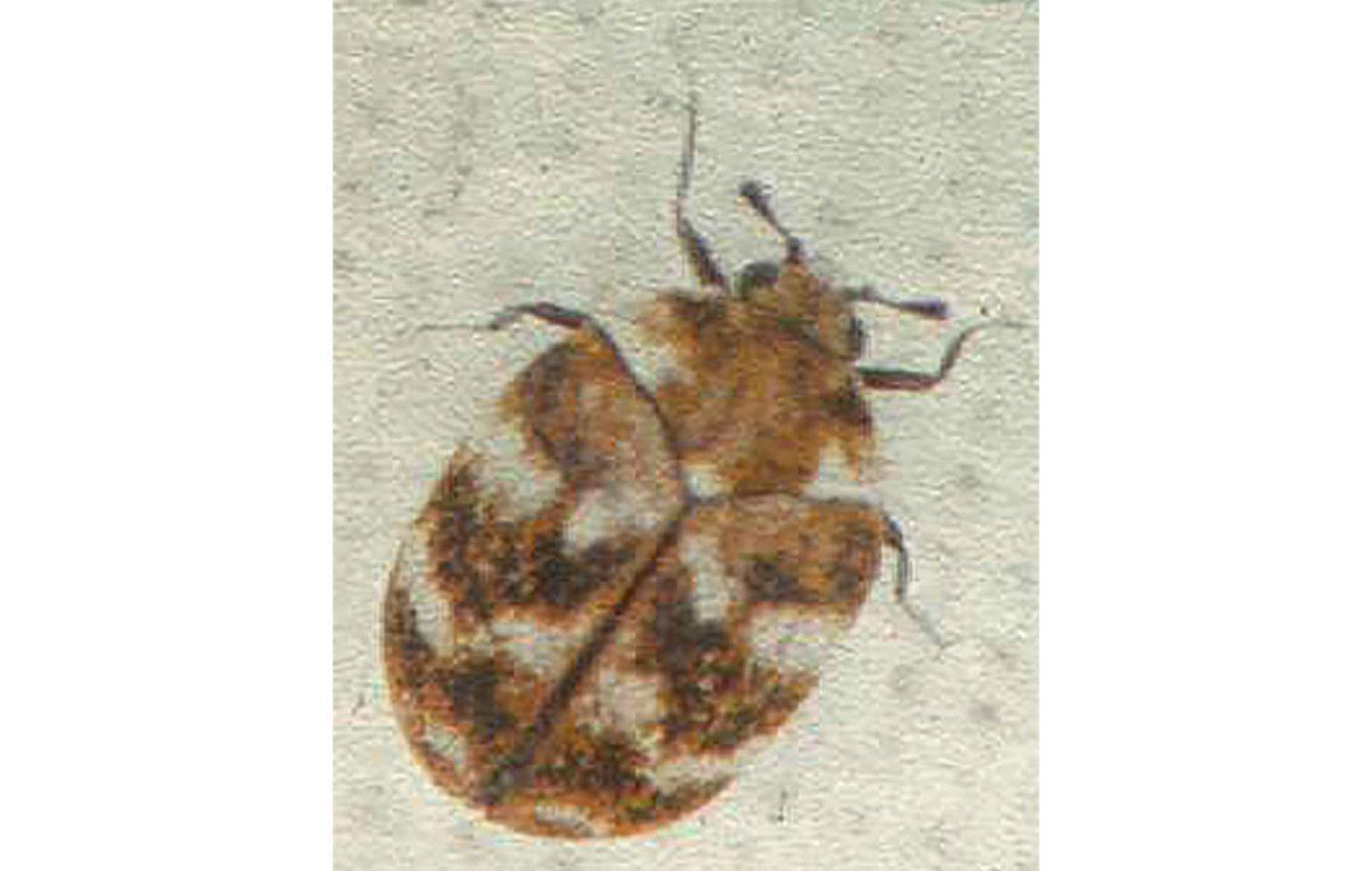 små biller i hjemmet