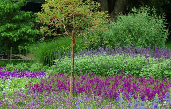 ... planter giver ikke meget plads til ukrudt. Foto: Karne Maj /Havenyt.dk