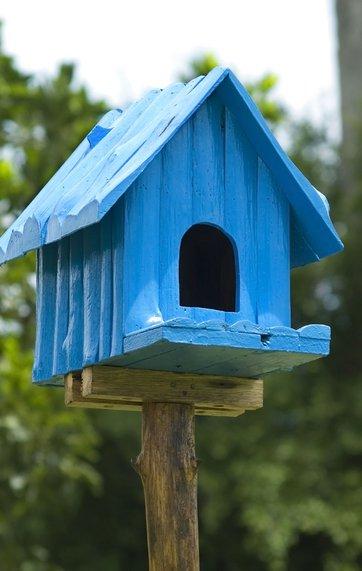 Sådan får du flere fugle i haven