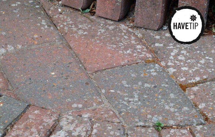 Flisepest på terrassen - sådan fjerner du det