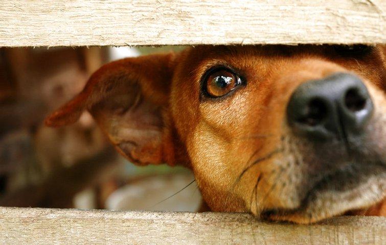 5 gode råd til at holde din hund i haven