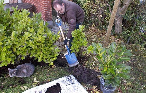 SÃ¥dan planter du i haven