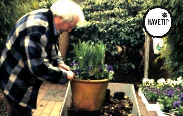 SÃ¥dan planter du bedst sommerblomster i krukker