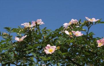 Valg af blomsterplanter til den nemme have